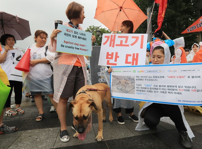 Though the growing calls over the weekend to replace dog meat with either fruits and drinks to celebrate Chobok received significant media coverage and resonated with the public, the debate over the issue of dog meat consumption is far from over. (Image: Yonhap)