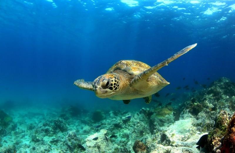Autopsy of Loggerhead Sea Turtle Raises Concerns Over Ocean Trash