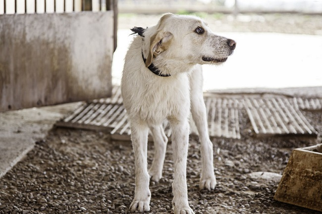 Death by Electrocution on Dog Meat Farms not Animal Cruelty, Court Rules