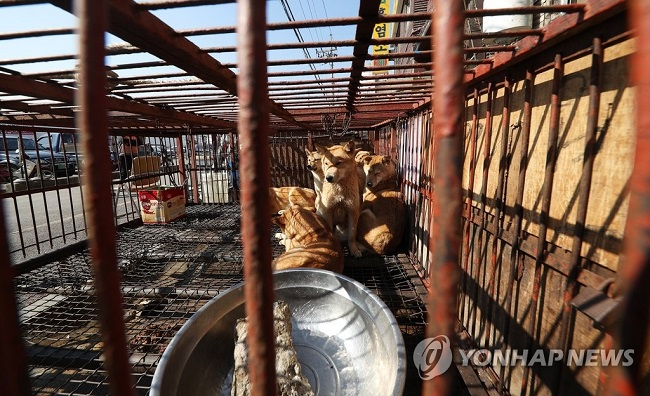 According to Section 8 of the Animal Protection Act, any cruel method of slaughtering animals – such as death by strangulation – is declared a crime. If found guilty, a fine of up to 10 million won or a prison sentence of up to one year can be handed out. (Image: Yonhap)