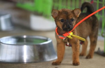 Bidders on Jeju Island Flock to Adopt 'Jeju Dogs'