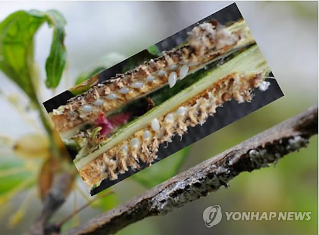 Namyangju announced that the map will serve as a tool to both prevent and rapidly contain the growth of diseases. (Image: Yonhap)