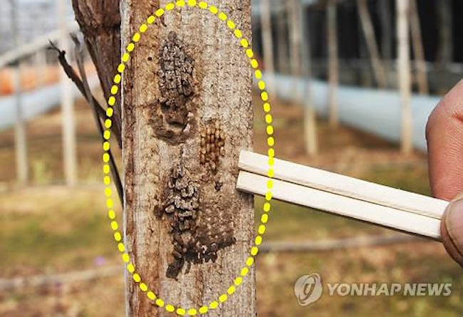 The map shows yearly, seasonal and regional areas where the probability of an outbreak is highest. (Image: Yonhap)