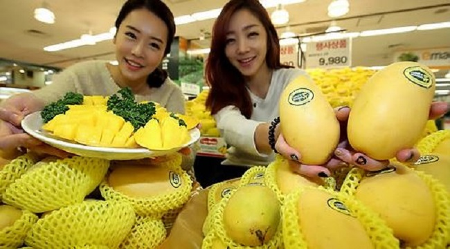 In addition, with the growth of multicultural families and increasing diversity in the Korean population, not to mention the average Korean's increased exposure to foreign foods, farmers like Kim expect market demand for subtropical produce to climb.(image: Yonhap)