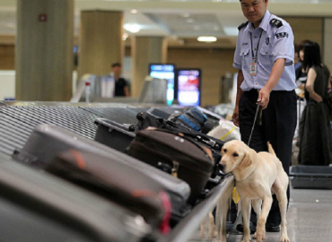 Former Canine Customs Agents Up For Adoption