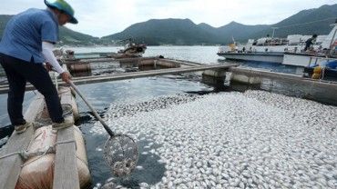 Fish Death Toll Rises to Nearly 1 Million Amid Heat Wave