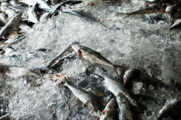 Overfishing Leaves Korea's Seas in Danger of Depletion