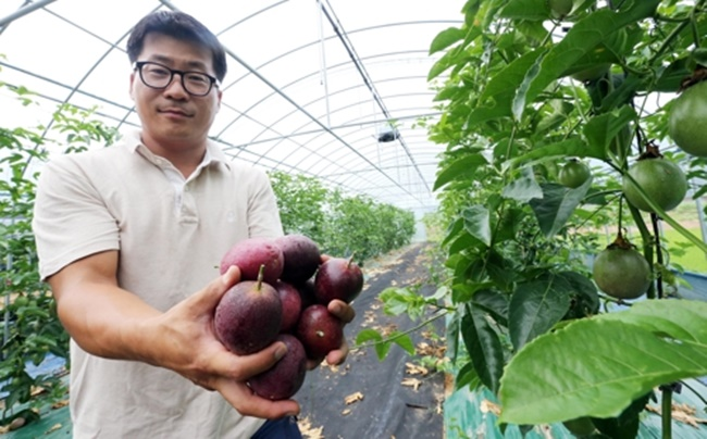 South Korean Farmers Look to Tropical Fruits Amid Scorching Heat