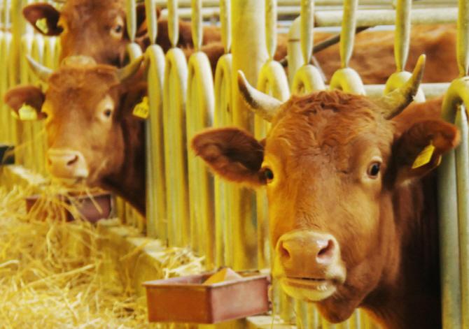 S. Korea's Animal Quarantine Agency Develops Diagnosis Kit for FMD