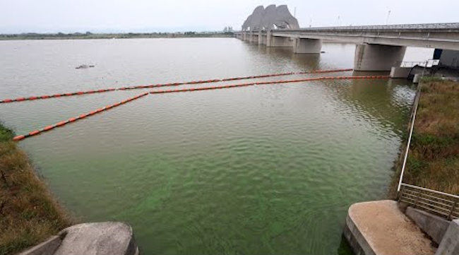 Algal blooms occur when blue-green algae grows and turns the surrounding water green. (Image: Yonhap)