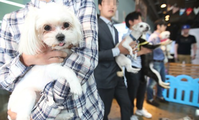 The selected startups possess new technology and outstanding ideas in premium pet food, health care products, beauty supplies, fashion items, and furniture for companion animals.  (Image: Yonhap)