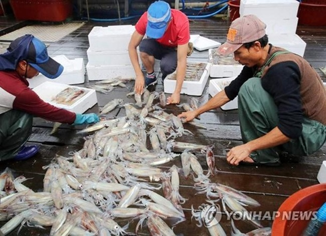 Imports of pollack and salmon, which have gained popularity among South Korean consumers in recent years, have also increased, up 22.2 and 25.9 percent, respectively. (Image: Yonhap)