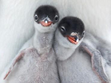 Korean Researchers Decipher Penguin Cries at King Sejong Station in Antarctica