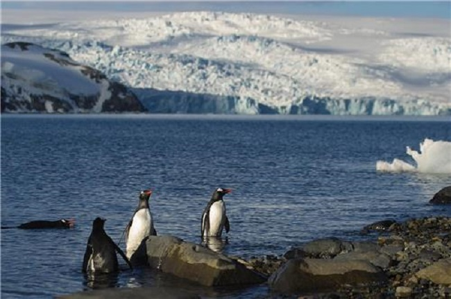 "A team of researchers at the Korea Polar Research Institute published a report in the online journal ""Scientific Reports"" on August 17 detailing the gentoo penguin's communication patterns.(Image: Yonhap)"