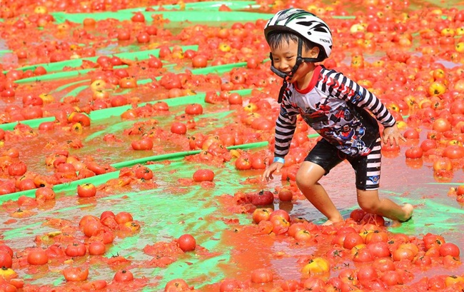A study has claimed the economic spinoffs of this year's Hwacheon Tomato Festival are estimated to total 6.7 billion won. (Image: Yonhap)