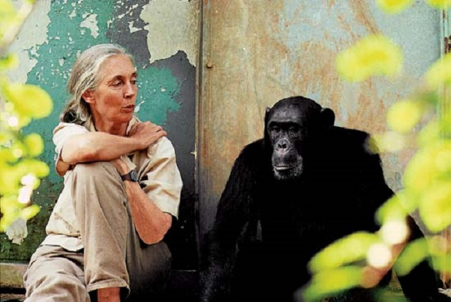 "British Anthropologist and Environmentalist Jane Goodall Doesn't Hide Disdain for Politicians at Yeouido ""Eco Talks"" Event. (Image: the Jane Goodall Institute)"