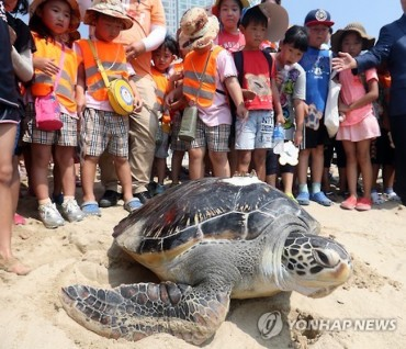 83 Sea Turtles, Including 80 Born in an Aquarium, Off to the Sea