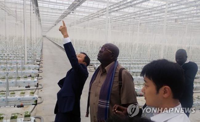 "The Ugandan State Minister for Defense, Charles Okello Engola, took a leisurely stroll through the neatly organized rows of green inside one of Buyeo County's ""smart farms"" on September 5. (Image: Yonhap)"