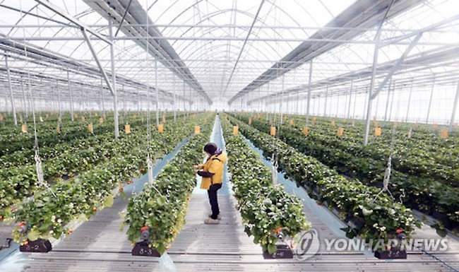 "Buyeo County's ""Smart Farms"" Catch Visiting Ugandan Minister's Attention. (Image: Yonhap)"