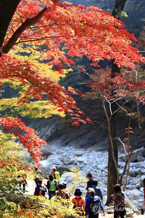 South Korean fire authorities are urging hikers to take caution during the autumn months as an increasing number of climbing accidents occur in September and October. (Image: Yonhap)