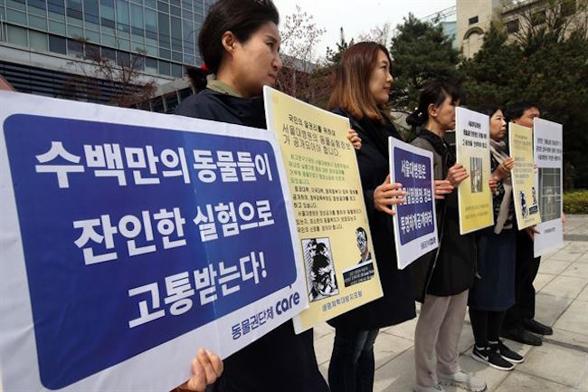 Animal rights groups saw their lawsuit demanding that Seoul National University Hospital publicly disclose its records on in-house animal testing approved by the Seoul 11th Administrative Court on August 28. (Image: Yonhap)