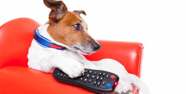 Growing Pet Ownership Sees More Pet-Themed TV Shows