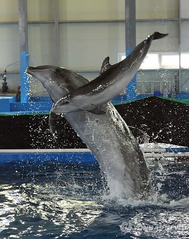"""""""Go"""" is his surname, taken from the dolphin's father """"Go Ah Rong"""", and his first name """"Jang Su"""" means """"long life"""" in traditional Chinese characters. (Image: Yonhap)"""