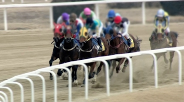 Horse Racing Organization Imports 4,000, Exports 15 Horses in Last 10 years