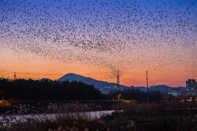 After the closing ceremony on November 21, a post-event birdwatching tour that will take visitors through key sites like Changnyeong County, Suncheonman Bay and Junam Reservoir is scheduled. (Image: Ulsan Metropolitan City Twitter)