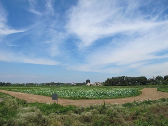 An international organization on water management technology has registered two South Korean reservoirs as world heritage irrigation structures, local governments said Wednesday. (Image: Yonhap)
