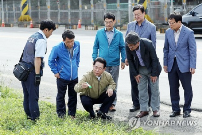 South Korea is ramping up efforts to prevent foreign fire ants from further spreading in the country after they were first detected in the southern port of Busan last week, government officials said Thursday. (Image: Yonhap)