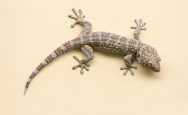 Live Lizard Discovered in Shipping Container Raises Questions Over Cargo Screening