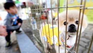 Evacuation Procedures for Pets Insufficient, Say Animal Owners