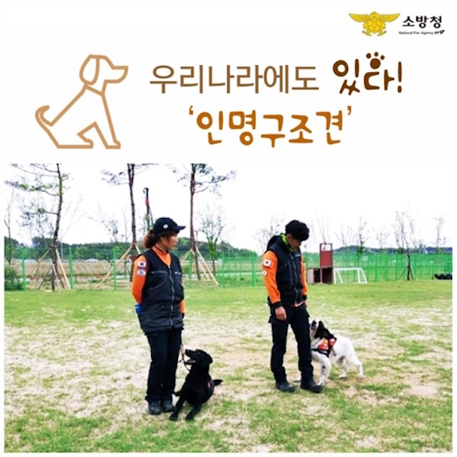 Andy will also see six of his fellow search and rescue dogs be sent to new homes; three will head to Seoul as part of the 911 emergency response unit, and one each of the remaining three will be sent to Gyeonggi Province, South Jeolla Province and Busan fire departments. (Image: Yonhap)