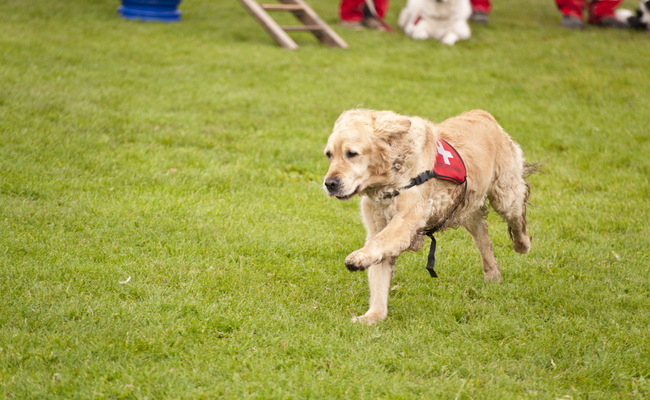 Number of Search and Rescue Dogs to Triple by 2021