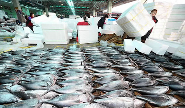 S. Korea to Launch K-Fish Brand in China