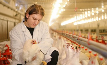 S. Korea Bans Poultry Imports from Netherlands