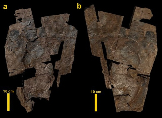 Largest-ever Skin Impression on Dinosaur Footprint Found in S. Korea