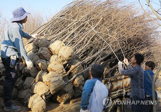 A South Korean agricultural town sent 53,000 fruit trees to Tajikistan in its first export deal, estimated to be worth 210 million won (US$192,000), its municipal office said. (Image: Yonhap)