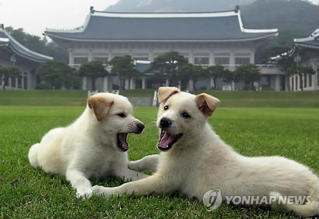 Pungsan dogs (Image: Yonhap)