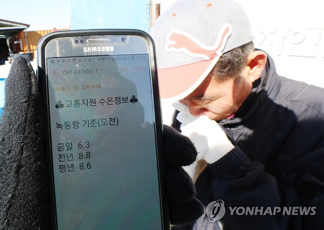 If it holds true that a 1-degree drop in water temperature to a fish is comparable to a 10-degree reduction for humans, the measured 6.3 degrees Celsius of the aquafarm's water, more than 2 degrees lower than the 8.8 degrees recorded during the same period last year, would be an inhospitable environment. (Image: Yonhap)
