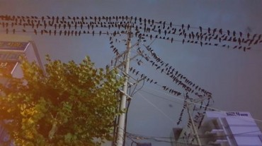 Suwon to Track Migrating Bird Movements Using Coffee and Chicken Vouchers