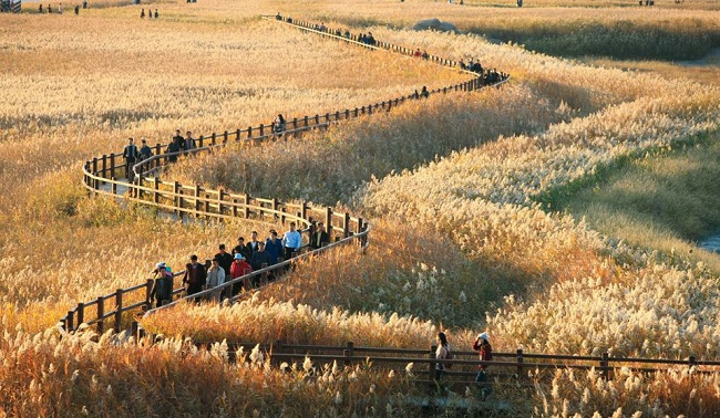 Suncheon Bay is the only national reserve currently designated as a national garden. (Image: Yonhap)