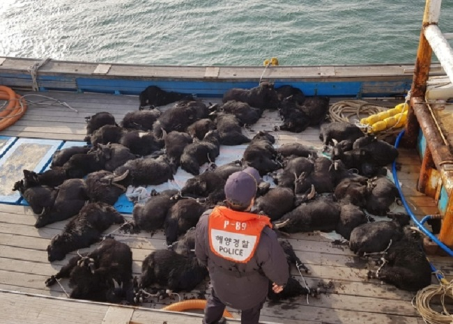 According to the coast guard, at 1:40 p.m. on January 19, the three individuals were on their way back from the island where they had captured the goats when their boat was spotted by a coast guard vessel. (Image: Boryeong Coast Guard)