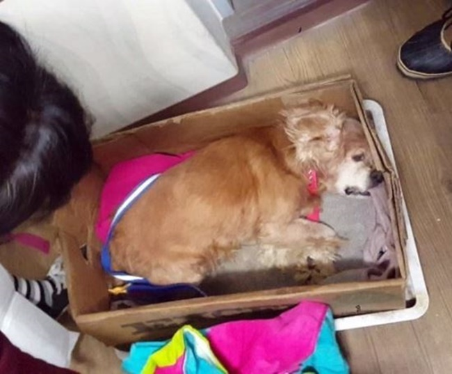 The female Cocker Spaniel was first discovered by a passerby near a trash can on Sunday and was sent to local authorities before succumbing to cold temperatures and other health problems, according to Cheonan's abandoned animal rescue center. (Iimage: Cheonan's abandoned animal  rescue center)