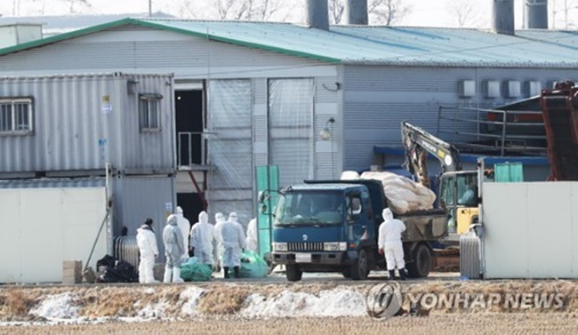 S. Korea to Beef Up Hygiene Regulations on Poultry Farms