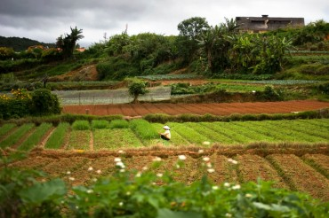S. Korea's Imports of Vietnamese Farm Products Jump 34 pct After 2015 Free Trade Deal