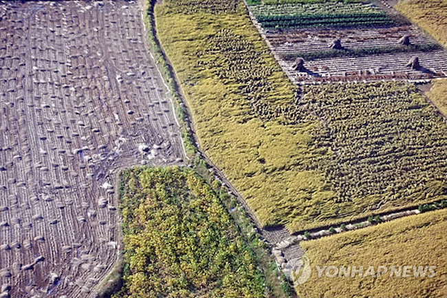 South Korea's arable land shrank in 2017 from a year earlier as some rice paddies and fields were converted into residential houses or public facilities, data showed Monday. (Image: Yonhap)