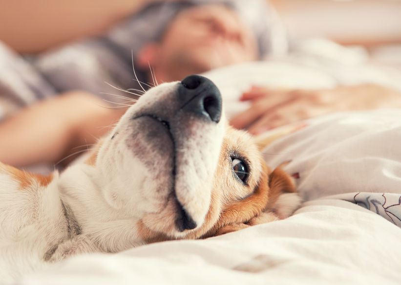 People who have experienced pet allergy symptoms in the past were found to suffer from other types of allergies, such as food allergies, atopic dermatitis, and allergic conjunctivitis. (Image: Kobiz Media)