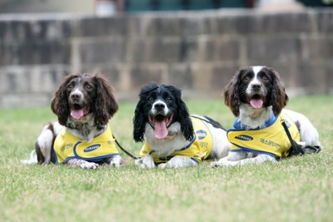 Gyeonggi Province has launched a new sniffer dog team to tackle termite infestations at cultural properties. (Image: Everland)